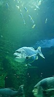 Cape Aquarium 20180719 211909 (13).jpg