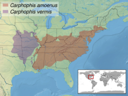 Carphophis sp. distribution.png
