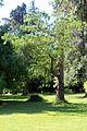 Caserta jardín inglés. 31.JPG