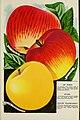 Catalogue (1902) (20555609312).jpg