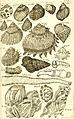 Catalogue systématique et raisonné, ou, Description du magnifique cabinet appartenant ci-devant à M. le c. de *** - ouvrage intéressant pour les naturalistes, and pour les amateurs de l'histoire (14764615282).jpg