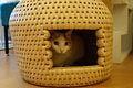 Cats (8258631090).jpg