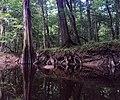 Cedar Creek (968a7f64-723e-4acc-844c-6a6d81bbab3d).jpg