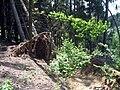 Cesta k obci Pohleď, vyvrácené stromy.jpg