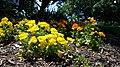 Chadwick Arboretum and Learning Gardens (34058248483).jpg