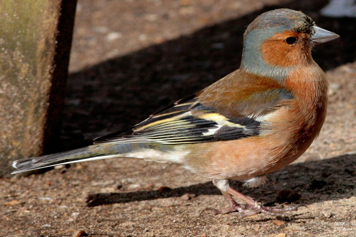 птицы псковской области фото с названиями конце концов