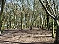 Cherry Tree Wood - geograph.org.uk - 2314310.jpg