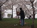 Cherry blossom 4107327.JPG