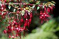 Chile - Cochamó climbing 84 - delicate flowers (7019885527).jpg