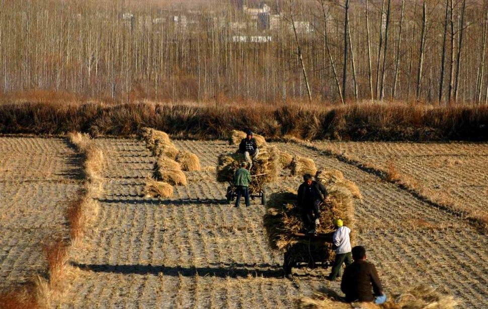 China Harvest