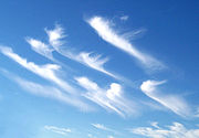 Cirrus uncinus ice crystal plumes showing high level wind shear, with changes in wind speed and direction.