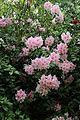 City of London Cemetery - flowering shrubs 08.jpg