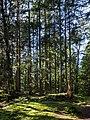 Clearing with tree stump in Gullmarsskogen ravine 2.jpg