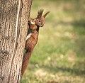 Climber (explored) - Flickr - hedera.baltica.jpg