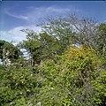 Collectie Nationaal Museum van Wereldculturen TM-20030092 Resten van het landhuis Mon Repos waar de slavenopstand is begonnen Sint Eustatius Boy Lawson (Fotograaf).jpg