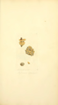 Coloured Figures of English Fungi or Mushrooms - t. 15.png