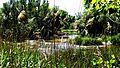 Confluencia del río Jarama y el río Henares al sur de la finca de La Guindalera.jpg