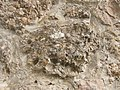 Conglomerate.2491.JPG
