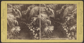 Conservatory, Fifth Avenue, New York City, from Robert N. Dennis collection of stereoscopic views.png