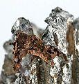 Copper-Silver-pas-117d.jpg