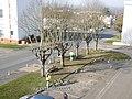 Cosne-sur-Loire, taille d'arbres.jpg