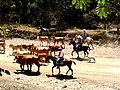 Costa Rican Cowboys.jpg
