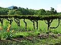 Countryside around Furano - Hokkaido - Japan - 11 (48012229538).jpg