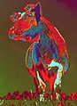 Cow Agfacontour, chromogenic development of equidenities serie.jpg