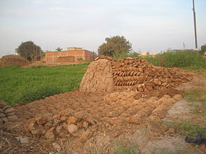 Cow dung cakes and heap set out for drying