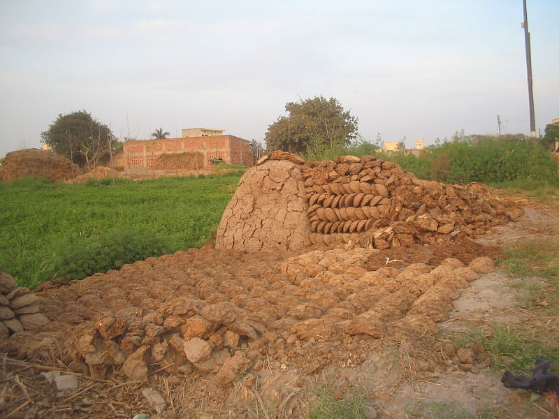 File:Cow dung cakes and heap set out for drying.JPG