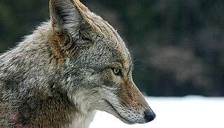 Pruntytown State Farm Wildlife Management Area