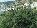 Crete P1050708.JPG