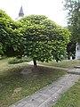 Cristuru Secuiesc and Ajka 1992-2002 plaque and memorial tree, 2019 Ajka.jpg