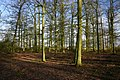 Cromwell's Plantation, Finningham - geograph.org.uk - 356332.jpg