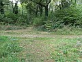 Cross roads of paths in Tottington Woods - geograph.org.uk - 1520465.jpg