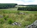 Cwm Berwyn Plantation from Esgair Cerrig, Ceredigion - geograph.org.uk - 508592.jpg