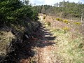 Cycle Trail in Dalbeattie Forest - geograph.org.uk - 392893.jpg