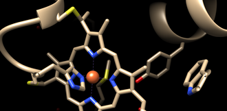 Cytochrome c - Heme prosthetic group of cytochrome c, consisting of a rigid porphyrin ring coordinated with an iron atom.