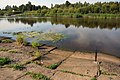 DSC01409 2019v Новый Ладога, водосброс в районе Слободы.jpg