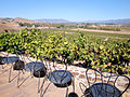 DSC24928, Viansa Vineyards & Winery, Sonoma Valley, California, USA (5107854572).jpg