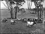 Dairy Farm, Illawarra (4903257437).jpg