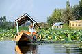 Dal Lake's sunset tour on a shikara - Srinagar (9967002244).jpg
