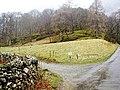Dalt Wood - geograph.org.uk - 370597.jpg