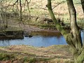 Dane's Brook - geograph.org.uk - 73901.jpg