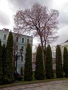 Danilov monastery 18