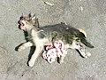 Dead cat 1380898.jpg