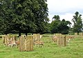 Deer in Dunham Park - geograph.org.uk - 503679.jpg