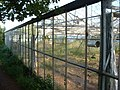 Derelict glasshouses NW of Dawlish - geograph.org.uk - 24633.jpg