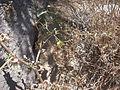 Desert plants 29.JPG