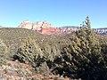 Devil's Bridge Trail, Sedona, Arizona - panoramio (15).jpg